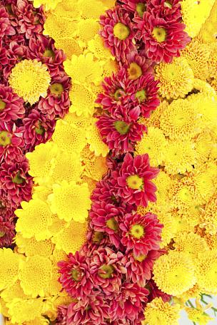 菊花,自然,垂直画幅,夏天,野生植物,特写,野花,花束,礼物,植物