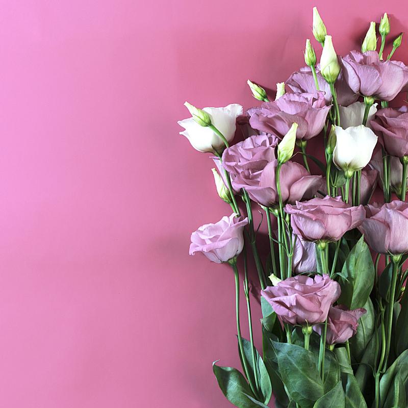 白色,粉色,粉色背景,请柬,清新,自然界的状态,浪漫,婚礼,芳香疗法,古典式