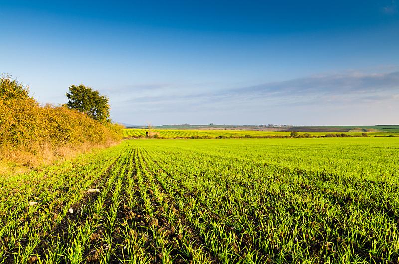 田地,绿色,背景,天空,水平画幅,无人,草坪,夏天,草,自由