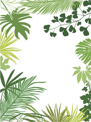 边框,叶子,鸡尾酒,叶状图案,棕榈叶,银杏树,留白,无人,绘画插图,夏天