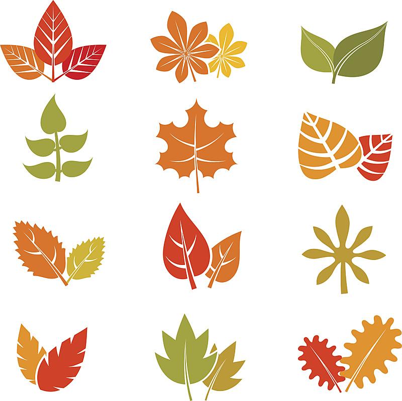 叶子,矢量,秋天,平坦的,计算机图标,美,形状,无人,表格,绘画插图