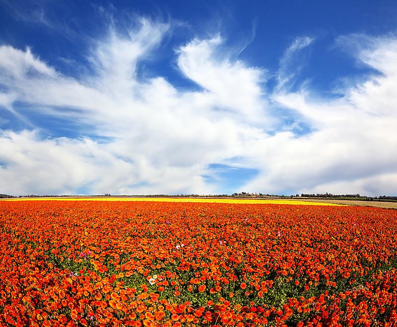 风,春天,云,力量,天空,美,水平画幅,夏天,毛莨科,户外