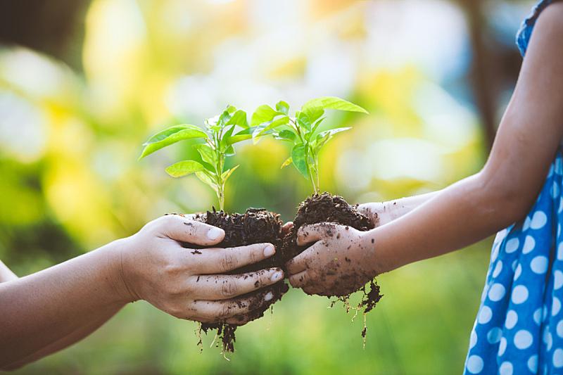 儿童,女孩,父母,植物,紧握双手,拿着,可持续生活方式,树苗,可持续资源,肥料