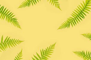 式样,蕨类,风景,平铺,分离着色,背景,顶部,枝,自然,边框