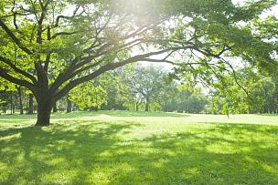 公园,日光,草原,白三叶草,枝繁叶茂,户外活动,草,散步道,逆光,树
