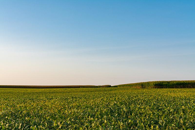 伊利诺斯州,美国中西部地区,农业,蔬菜,清新,自然界的状态,食品,有机农庄,农场,植物