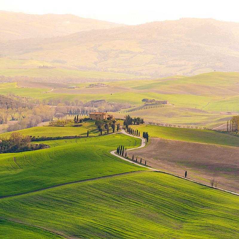 丘陵起伏地形,托斯卡纳区,地形,春天,维得斯卡,柏树,山,无人,户外,农业活动