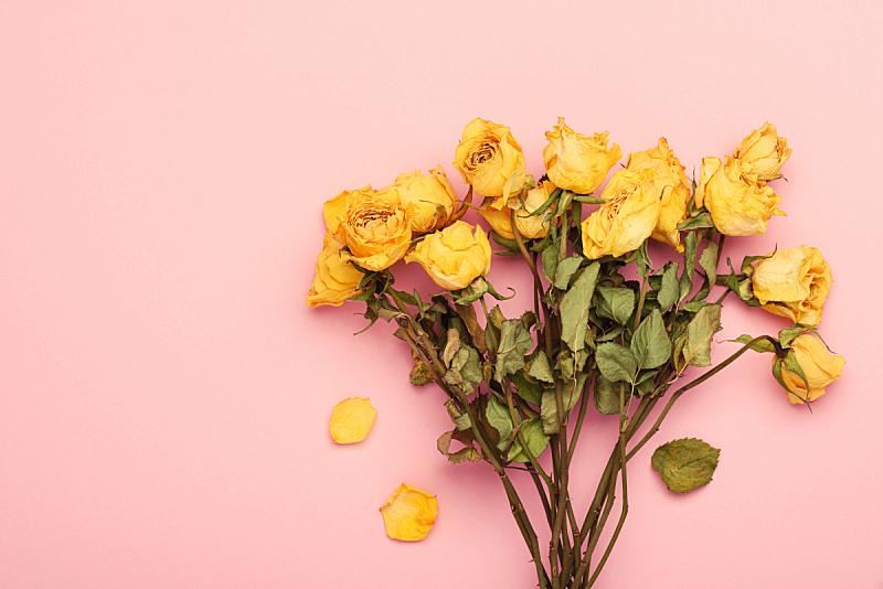 玫瑰,黄色,干的,花束,周年纪念,波兰,死的,浪漫,复古风格,枯萎的
