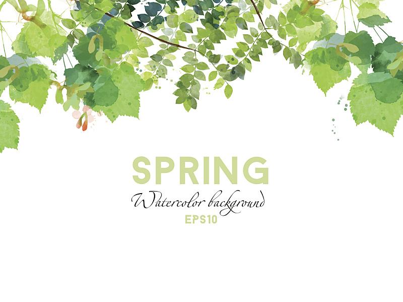春天,矢量,背景,水彩画,水彩画颜料,叶子,美,贺卡,绘画插图