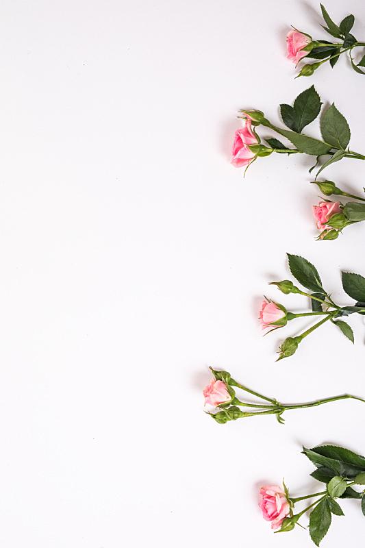 边框,木制,风景,背景,平铺,干的,玫瑰,构图,花,上装
