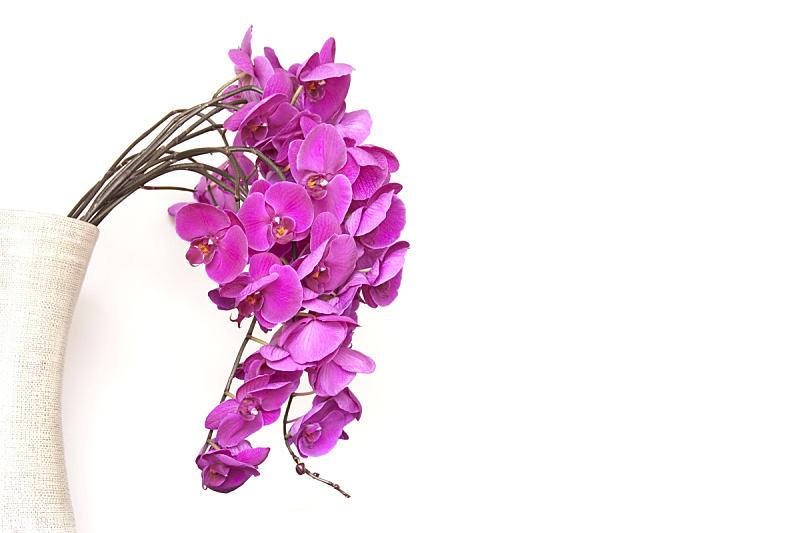 兰花,花瓶,白色背景,粉色,分离着色,蝴蝶兰,母亲节,美,贺卡,禅宗