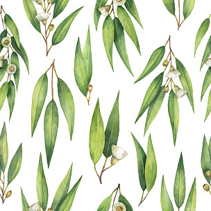 桉树,叶子,四方连续纹样,水彩画,枝,植物学,草药,水彩颜料,澳大利亚,草本