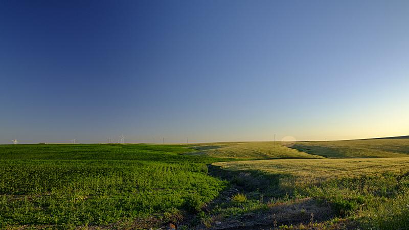西班牙,赫雷斯-拉弗龙特拉,春天,加的斯,安达卢西亚,地形,在之间,黄昏,日落,挨着