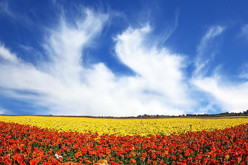 强风,云,天空,美,风,水平画幅,毛莨科,户外,草,毛莨属植物