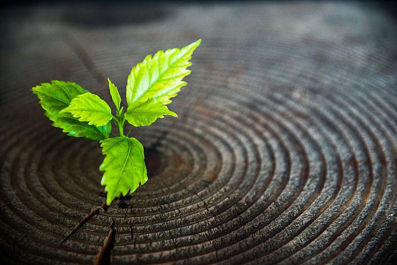 树桩,古老的,植物,幼小动物,复兴时期风格,重新造林,忍耐力,秧苗,树苗,新生活