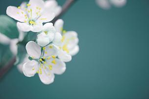 仅一朵花,春天,自然美,花头,花朵,花蕾,大特写,枝,特写,夏天