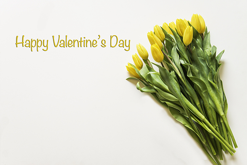 Bunch yellow tulips on white background. Wording text Happy Valentine's Day