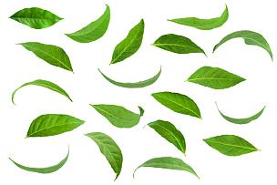 叶子,绿色,静脉,合成图像,水平画幅,枝繁叶茂,符号,夏天,布置,生长