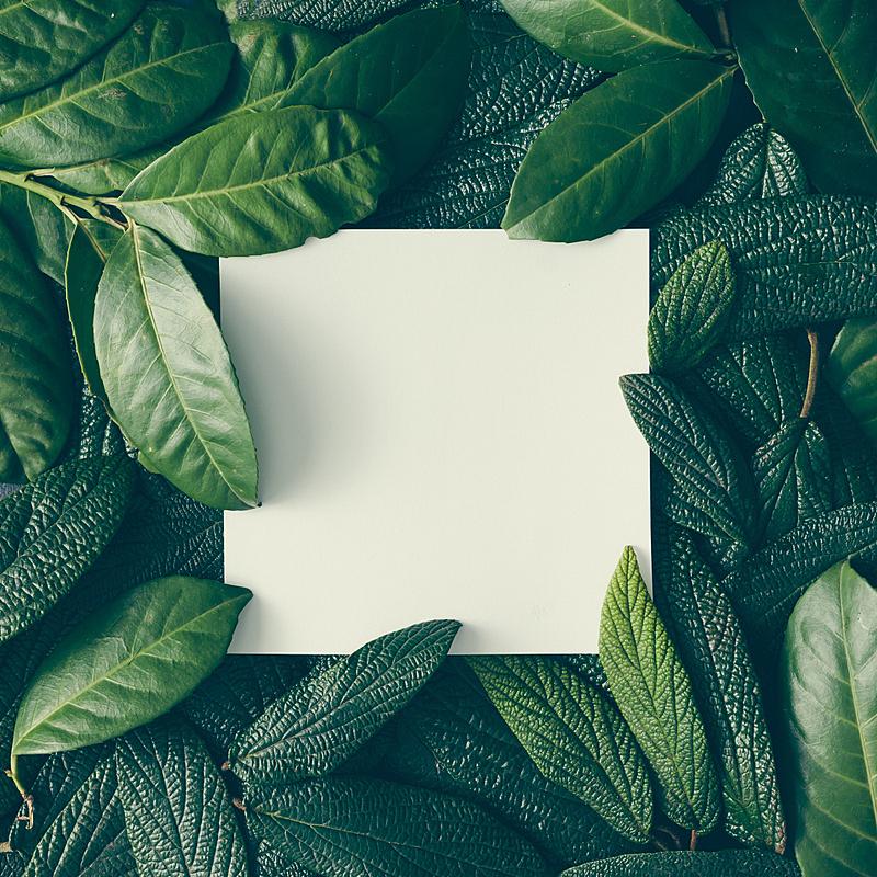 叶子,绿色,自然,创造力,计划书,平铺,音符,概念,卡片,做