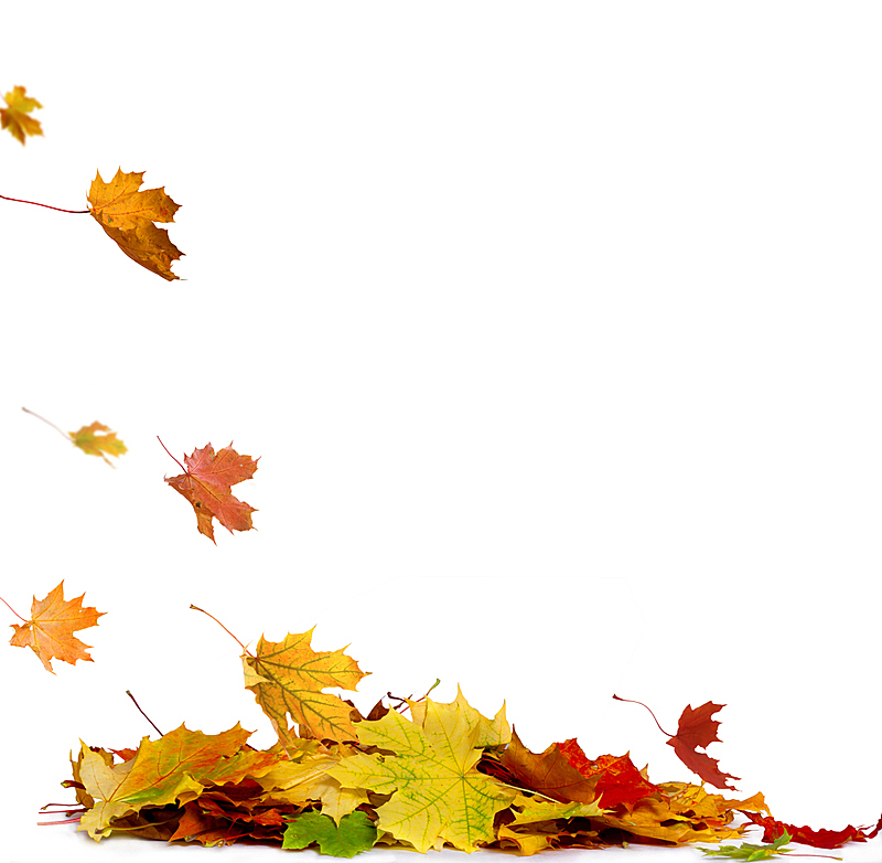 干的,叶子,季节,秋天,白色背景,堆,红色,多色的,反差,叠