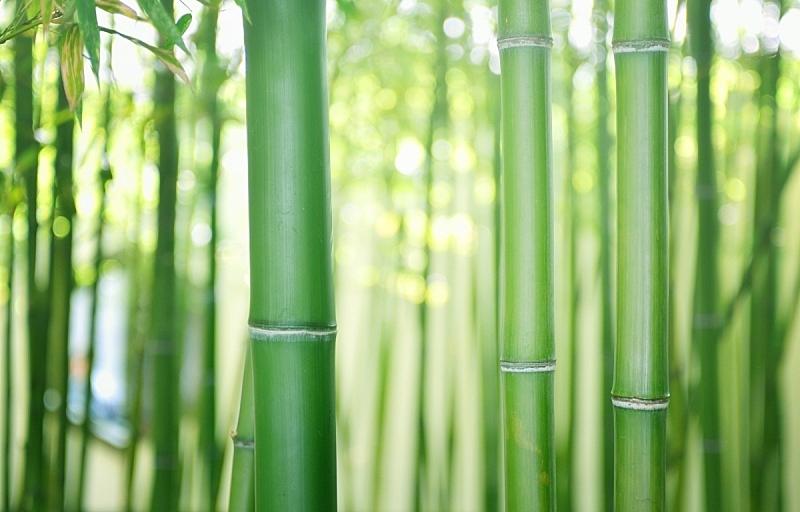 竹,留白,水平画幅,无人,热带雨林,夏天,户外,特写,树林,竹子叶