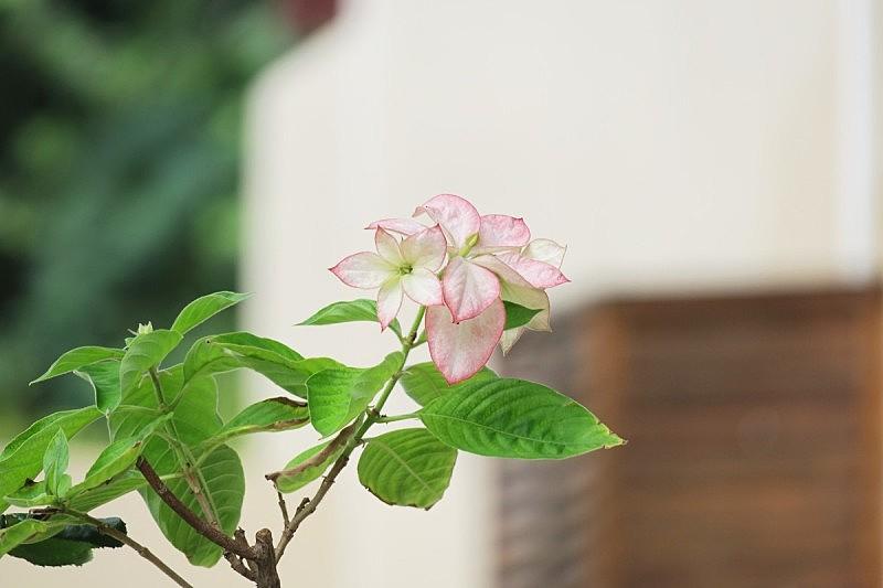 仅一朵花,自然美,粉色,背景,运动模糊,棕榈叶,自然,美,水平画幅,纹理效果