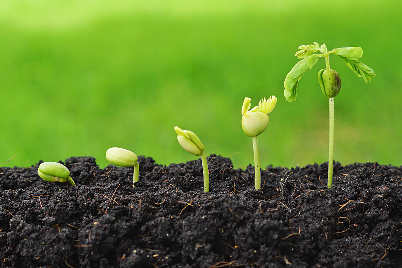 植物,秧苗,新的,水平画幅,能源,无人,泥土,想法,花蕾,新生活