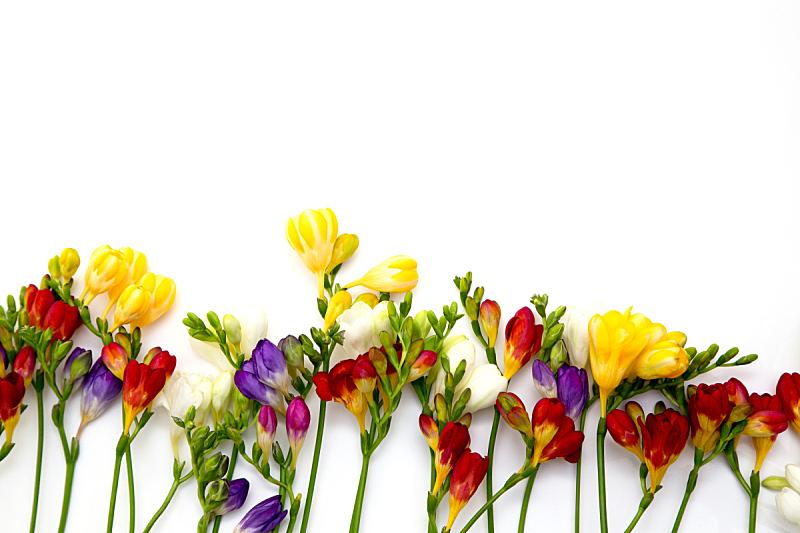 浪漫,小苍兰,春天,背景,特写,白色背景,旅游目的地,自然美,文字,花