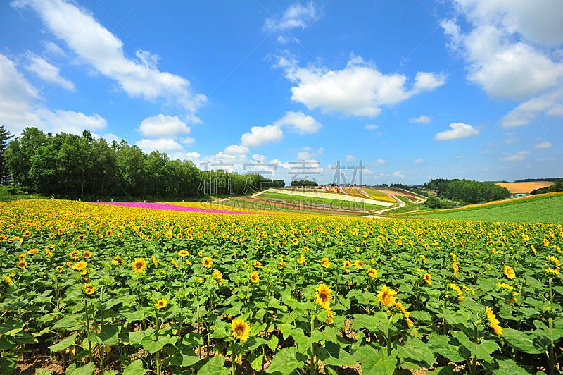 田地,日本,北海道,天空,美,里山,水平画幅,无人,夏天,户外