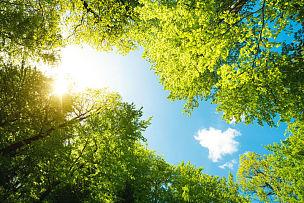 正下方视角,森林,绿色,在下面,树梢,树冠,低视角,向上看,山毛榉树,枝繁叶茂