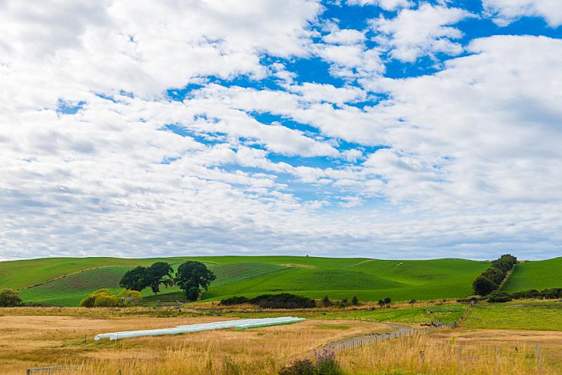 山,绿色,新西兰,风景,新西兰南岛,山谷,尖峰,家牛,天空,水平画幅