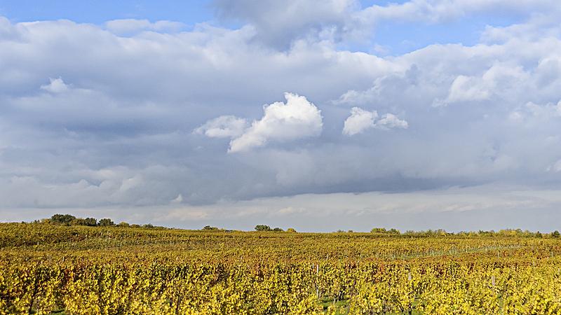 布尔根兰,葡萄园,新民湖,酒商,耕地,天空,葡萄酒厂,水平画幅,户外,草