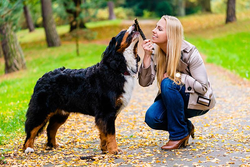 狗,游戏,女人,寻回(动物习性),棍,自然,草地,业主,水平画幅,进行中