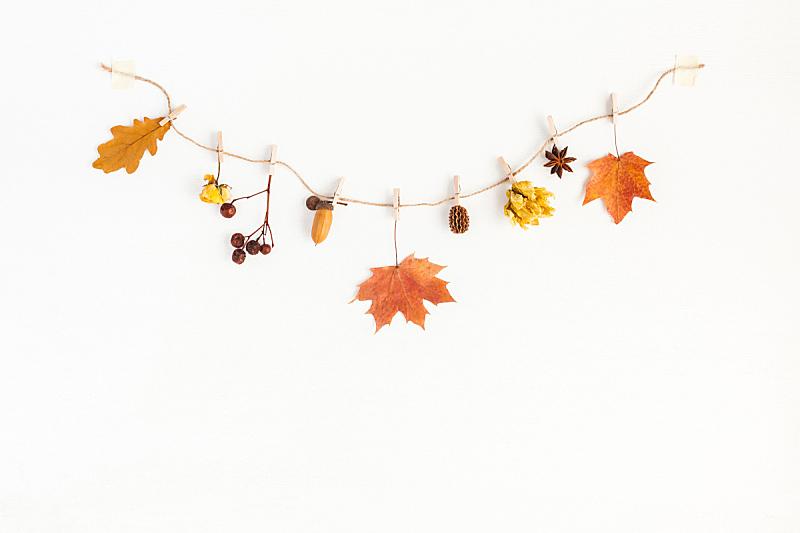 秋天,在上面,白色背景,风景,平铺,橡树果,茴芹,叶子,爱沙尼亚,枫树