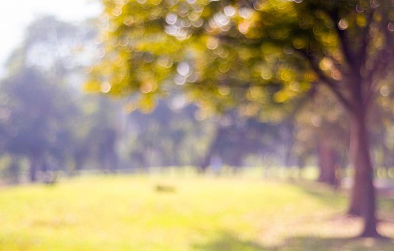 背景虚化,运动模糊,曙暮光,园林,自然,秋天,背景,光,公园,金色