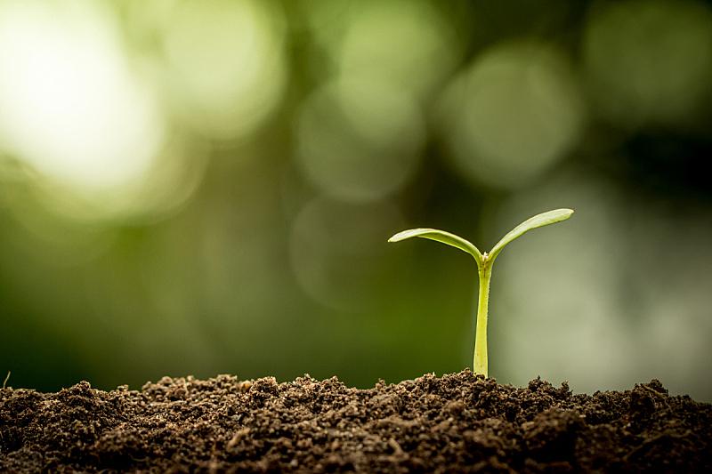 泥土,绿色,植物,背景,幼小动物,背景虚化,树苗,肥料,秧苗,堆肥