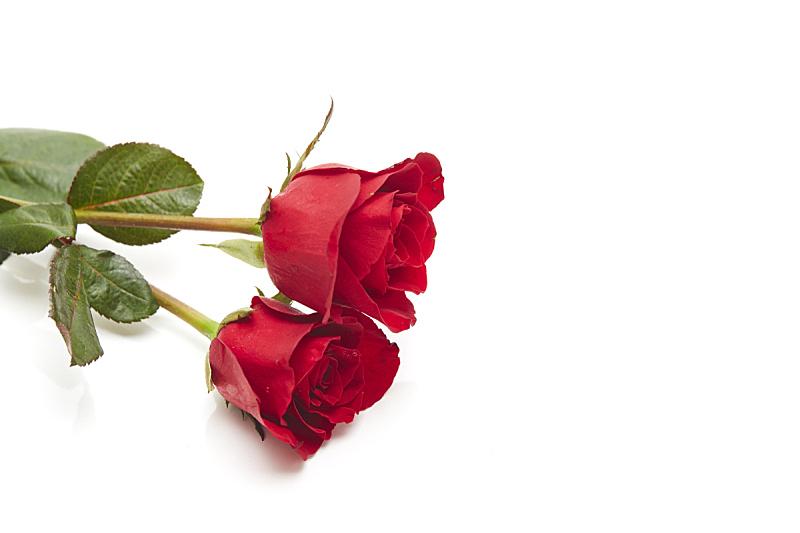 玫瑰,婚礼,红色,两个物体,白色背景,周年纪念,清新,一个物体,背景分离,浪漫