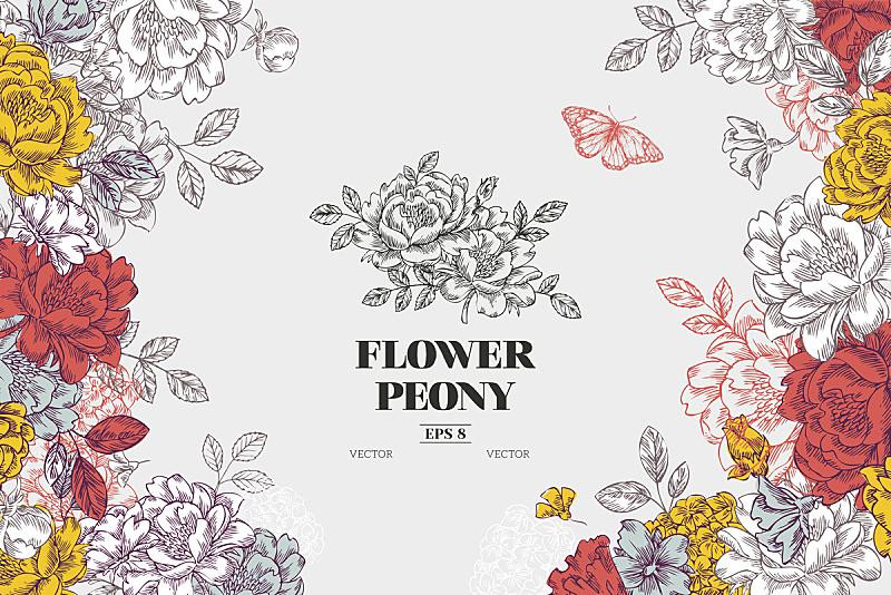 仅一朵花,牡丹,绘画插图,式样,矢量,背景,模板,花坛,绘画作品,植物学