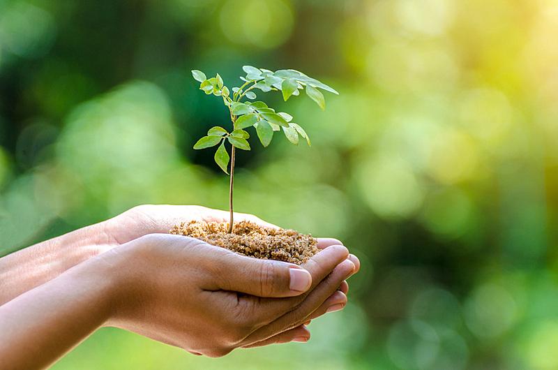 环境保护,秧苗,自然,概念,手,森林,草,背景虚化,生长,树