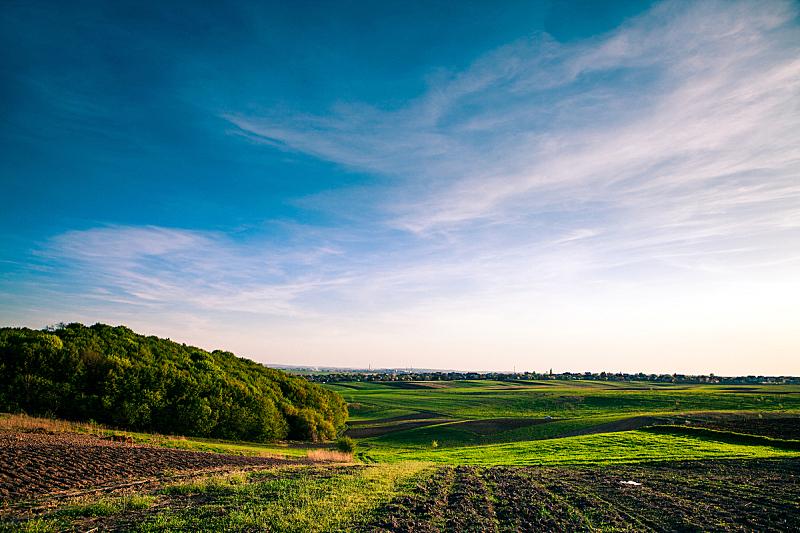 绿色,田地,农业,自然,季节,草原,粉色,图像,草,无人