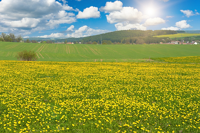春天,天空,水平画幅,无人,户外,草,植物,阳光光束,清新,花头