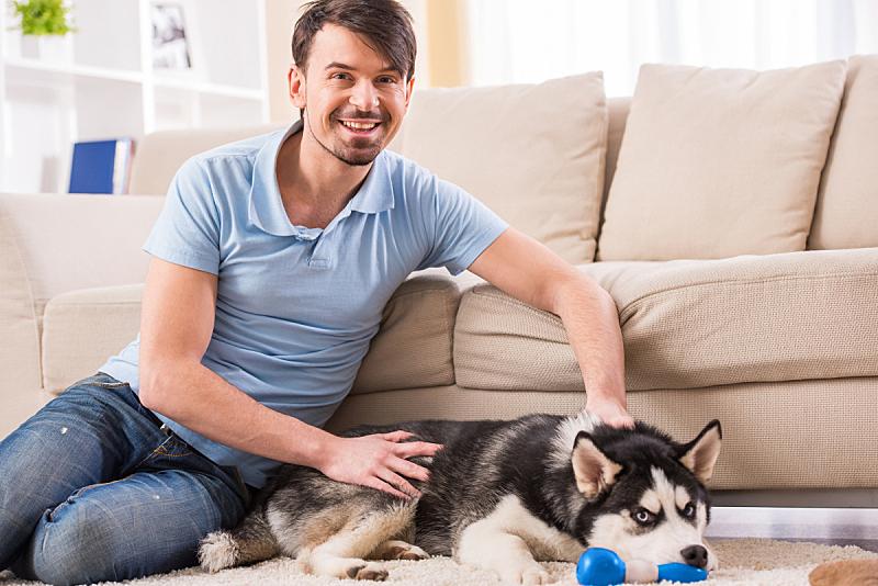 狗,男人,美,水平画幅,美人,白人,沙发,看,地板,雪橇犬