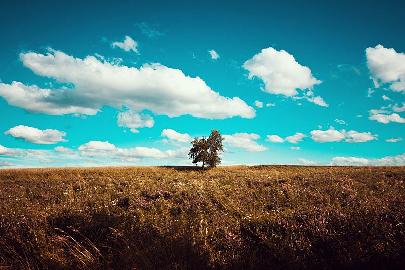 田地,绿色,寂寞,天空,美,留白,水平画幅,山,夏天,偏远的