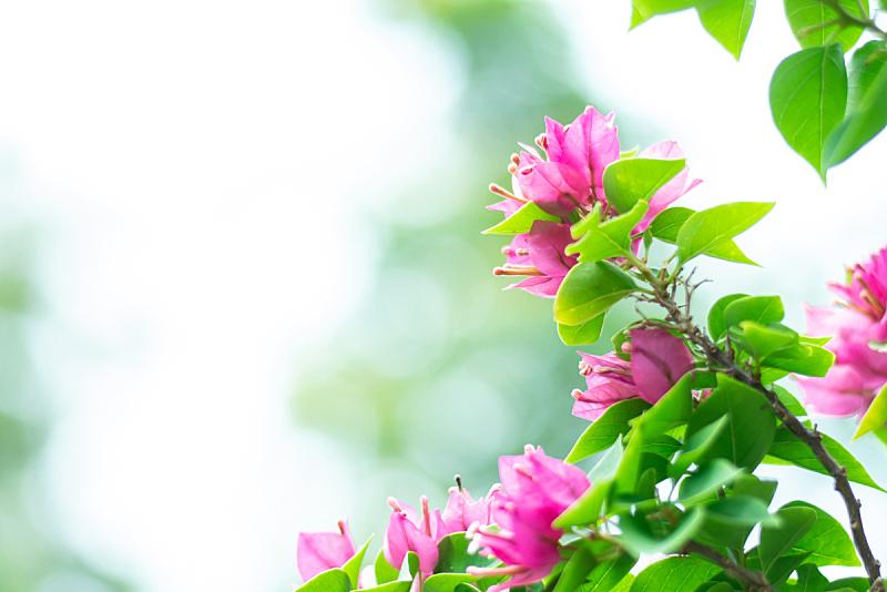 草,自然,背景,接力赛,草坪,清新,环境,泰国,春天,植物