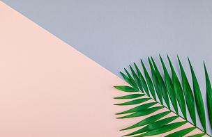 棕榈叶,彩色图片,背景,纸,鸡尾酒,一个物体,背景分离,边框,热带气候,灰色