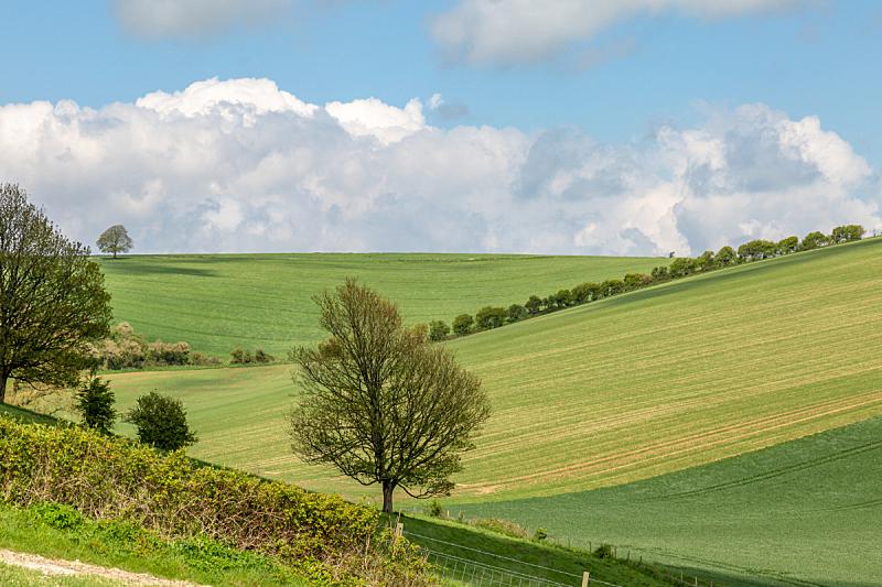 春天,南丘,地形,农业,云,英国,英格兰,自然美,农场,阴影