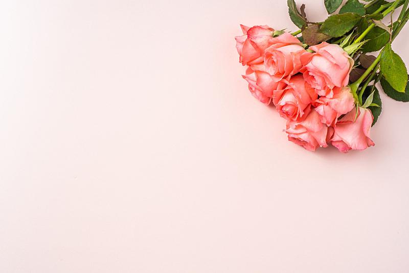 粉色,母亲节,玫瑰,视角,事件,贺卡,彩色背景,浪漫,简单,复古风格