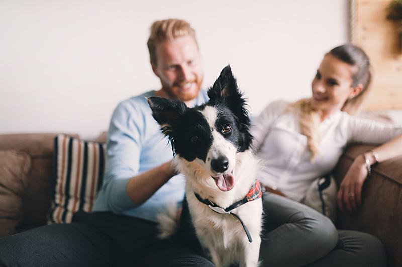 宠物,家庭生活,异性恋,自然美,爱的,青年伴侣,塞尔维亚黑山,公寓,狗,业主