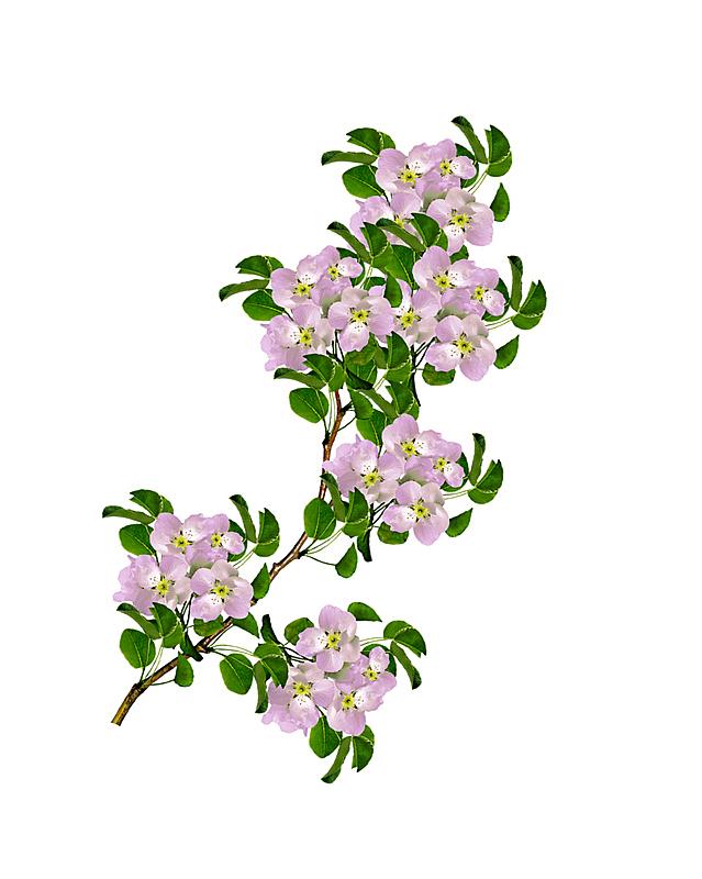 色彩鲜艳,明亮,杏树,梨树,李树,垂直画幅,美,复活节,边框,樱花