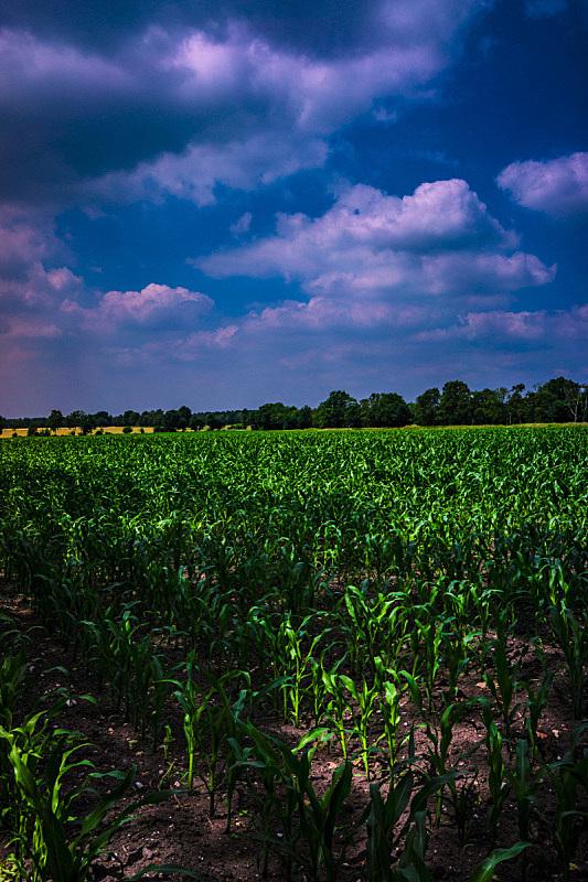 相位图像,耕地,北莱茵威斯特法伦州,垂直画幅,天空,枝繁叶茂,无人,泥土,时间,户外